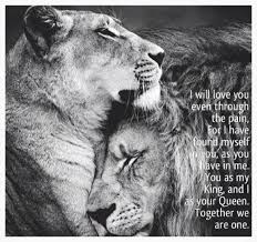 animal odd couples queens lions relationships