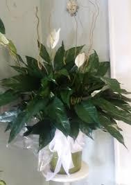florist augusta ga peacelily in augusta ga s floral boutique