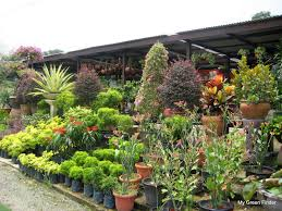 my green finder plant vendors katsura garden water feature