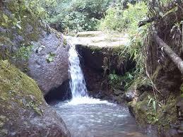 imagenes lindas naturaleza finca de 540 000m2 rodeada de naturaleza lindas vistas bosque