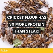 Crickets Meme - cricket flour has 3x more protein than steak dr axe