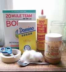 Natural Ant Killer For Kitchen by Get Rid Of Your Ants With A Sweet Diy Treat Hometalk