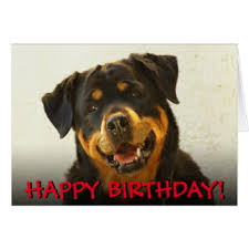 rottweiler birthday cards greeting photo cards zazzle
