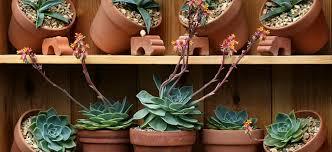 Gardening Trends 2017 Five Gardening Trends We Love U0026 You Will Too Flower Power