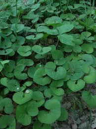 native plant nursery michigan michigan native plants database search