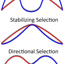 what is directional selection