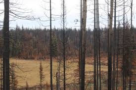 Bc Wildfire Interface by Reducing The Risk Of Wildfires Opinion 100 Mile House Free Press