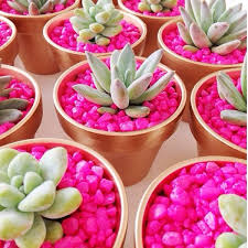 Make A Brick Succulent Planter - 16 neon diy projects to make your home look brighter fish tank