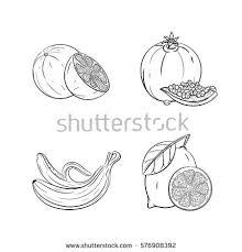 hand drawn vector illustration watermelon slices stock vector