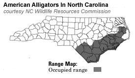 alligators in map nc towndock