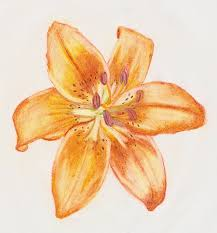 tiger lilies tattoos on shoulder photos pictures and sketches
