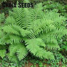 indoor plants ferns promotion shop for promotional indoor plants