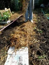 Best Type Of Mulch For Vegetable Garden - organic mulch a gardener u0027s good friend bonnie plants