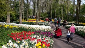 keukenhof flower gardens keukenhof the most beautiful spring garden in the world dutch