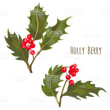 set of holly berry branches red berries and green leaves christmas