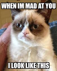 Im Mad At You Meme - grumpy cat when im mad at you i look like this meme explorer