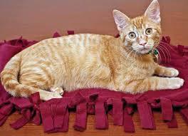 make a fleece blanket for homeless cats and kittens