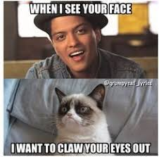 The Meme Song - 147 best grumpy cat images on pinterest grumpy cat grumpy kitty
