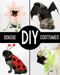 Small Puppy Halloween Costumes 25 Small Dog Costumes Ideas Wiener Dogs