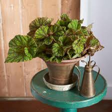 8 Houseplants That Can Survive by 10 Hardy Houseplants Anyone Can Grow With Ease Rodale U0027s Organic Life