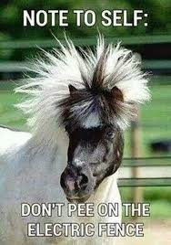 Clean Animal Memes - 25 very funny horse meme photos and pictures