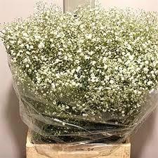 baby s breath wholesale gypsophila dynamic wholesale flowers uk wedding flowers