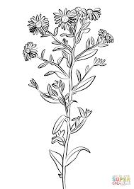 european michaelmas daisy coloring page free printable coloring