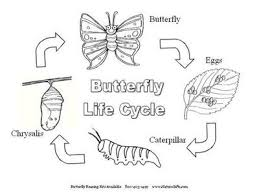 butterfly life cycle coloring page to encourage to color pages