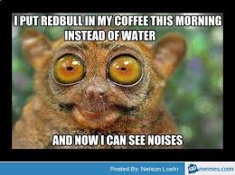 Lemur Meme - redbull in coffee see noises lemur bush baby pinterest lemur