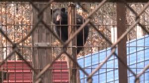 black friday madison wi unique black bear in rhinelander euthanized wkow 27 madison wi