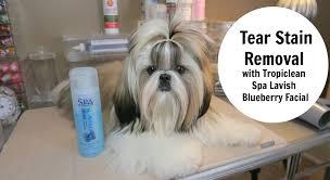 tear stain removal spa lavish youtube