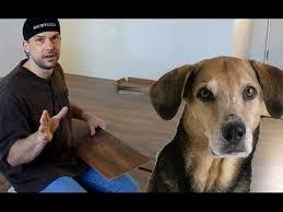 Laminate Flooring And Dogs Dog Pee On Laminate Flooring Youtube