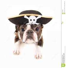 pirate stock photos images u0026 pictures 22 914 images