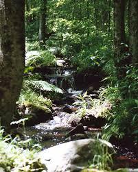 silver creek u0026 habitats