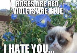 Cat Meme Boat - top 10 grumpy cat memes