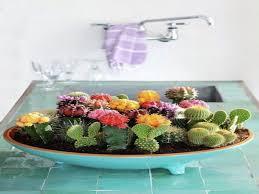 plants succulents mini succulent cactus garden indoor cactus