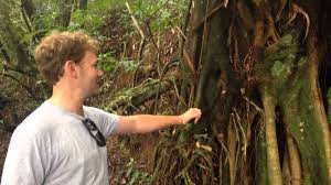 Adaptation Of Plants And Animals In Tropical Rainforest