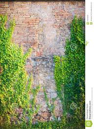 old red wall with climbing plants stock photo image 41844940