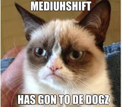 Internet Meme Cat - why do cats dominate the internet