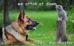 Funny Cat And Dog Memes - lolcats attack lol at funny cat memes funny cat pictures with