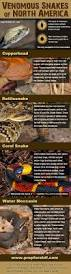 20 best snake id venomous or not images on pinterest reptiles