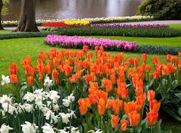 guided excursion to keukenhof from amsterdam tickets holland
