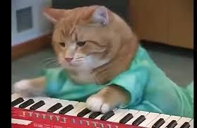 Keyboard Cat Meme - keyboard cat gifs tenor