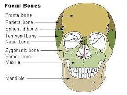 Human Anatomy Skull Bones 36 Best Xray Images On Pinterest Human Anatomy Rad Tech And
