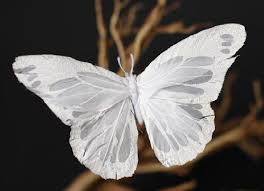 64 best white butterflies images on white butterfly