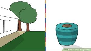 Beginners How To Grow Just by How To Grow Bougainvillea 9 Steps With Pictures Wikihow