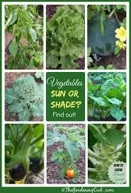 plants that don t need sunlight to grow shade tolerant vegetables vs sun friendly veggies the gardening cook