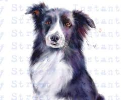commercials with australian shepherds australian sheepdog etsy