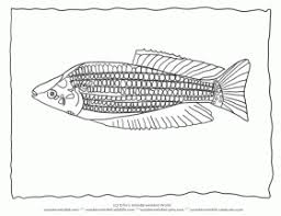 tropical fish coloring rainbow fish coloring printable