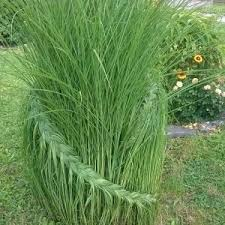 decor ornamental grasses for outdoor decorating